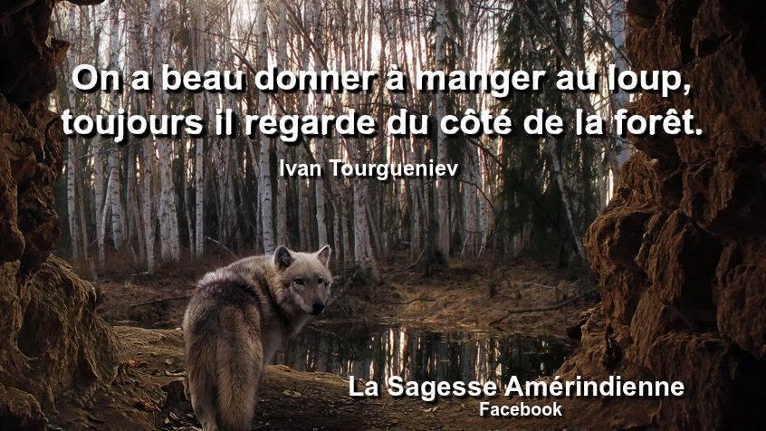 Citation Sur Le Loup